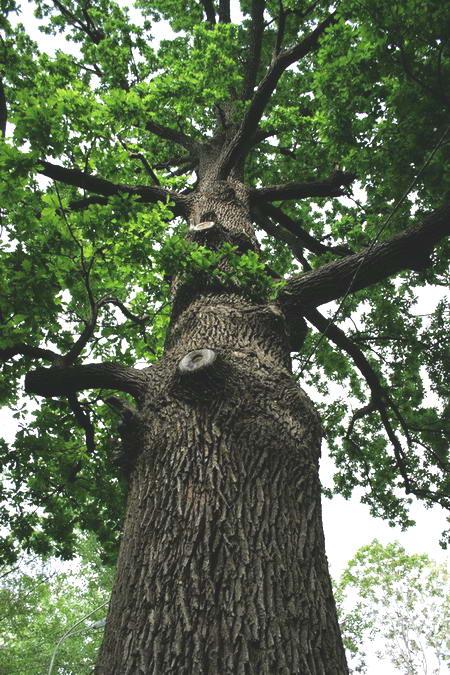 Поставьте ребенка спиной к дереву так, чтобы были...