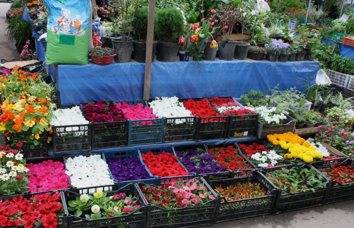 В омске рассада цветов 9