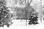 zima3-v-Tashkente
