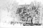 zima4-v-Tashkente