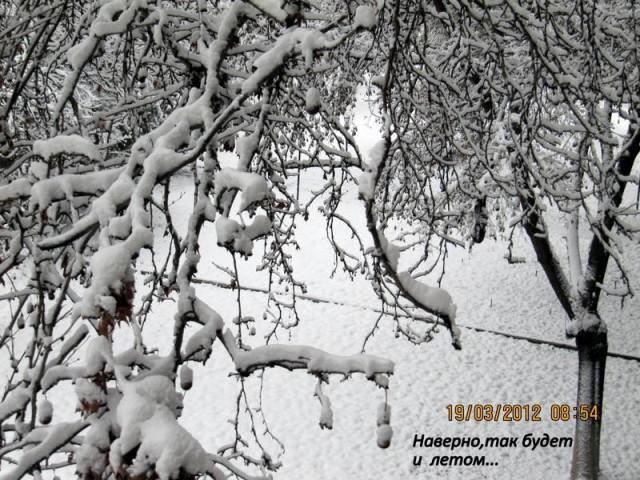 Новый ташкентский климат