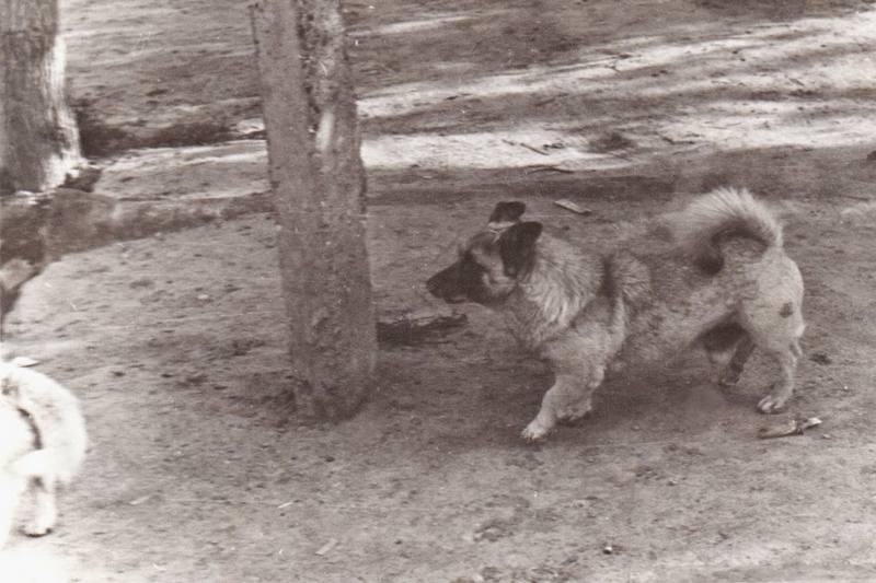 Махалинские собаки