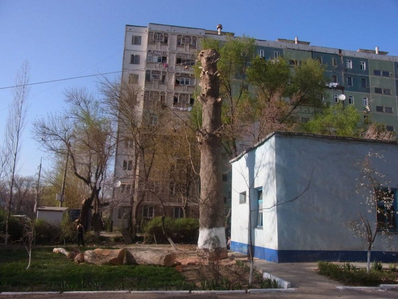 Чинары Ташкент